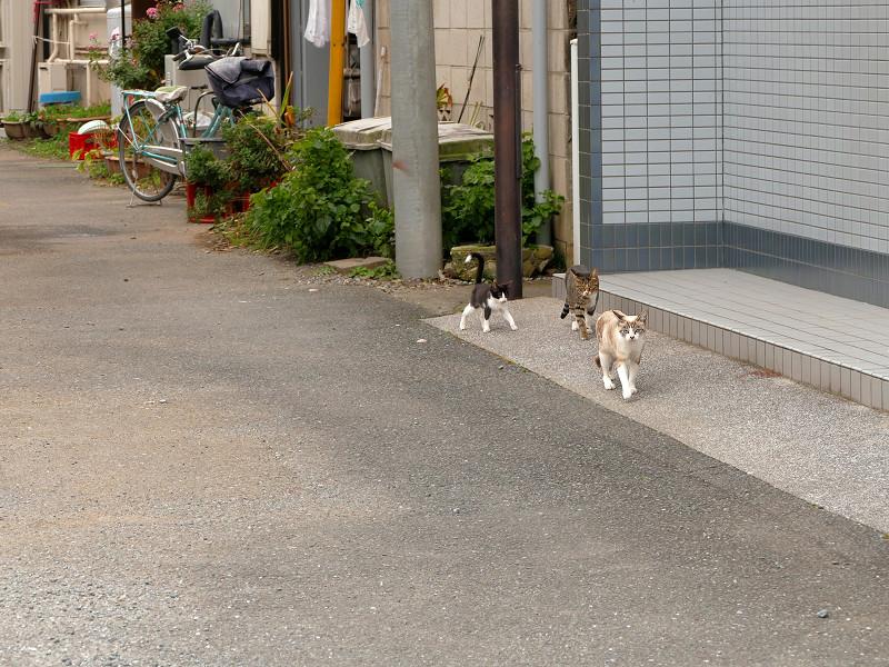 道端を歩く親子猫3