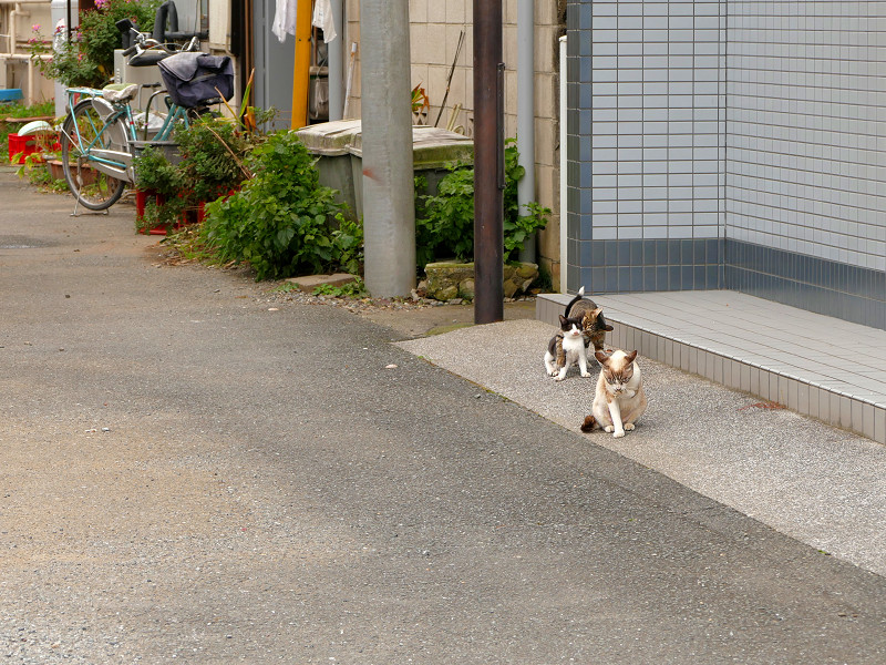 道端を歩く親子猫4