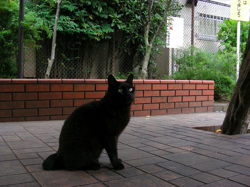 公園にいた黒猫1