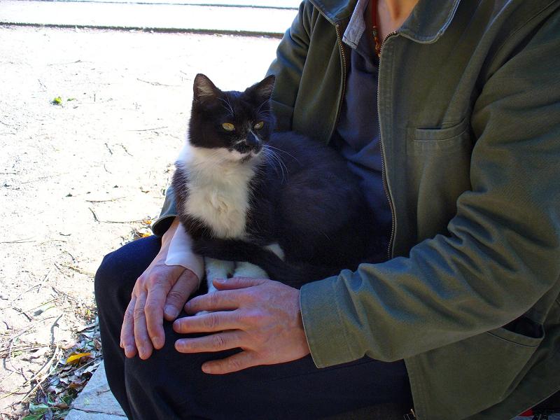 膝に乗ってる黒白猫1