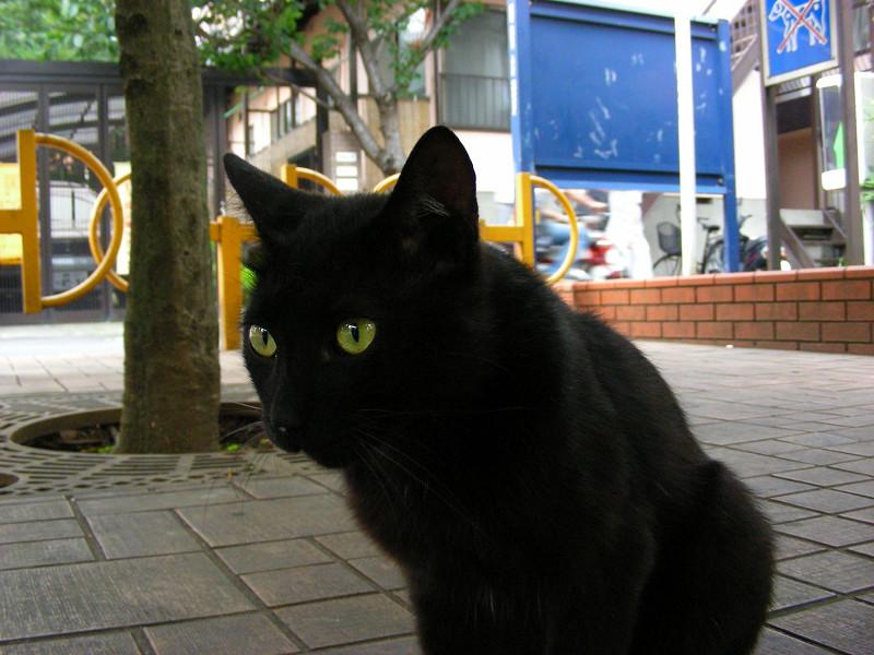 公園にいた黒猫2
