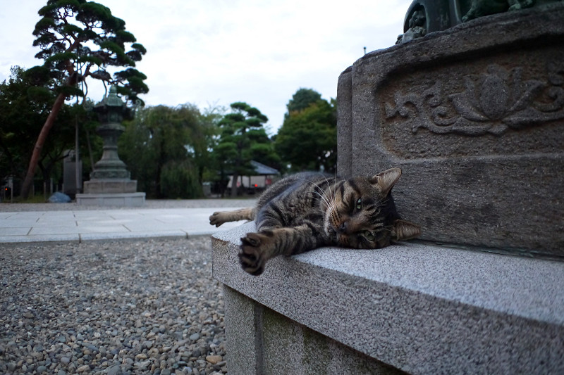 灯籠で寝ているキジトラ猫1