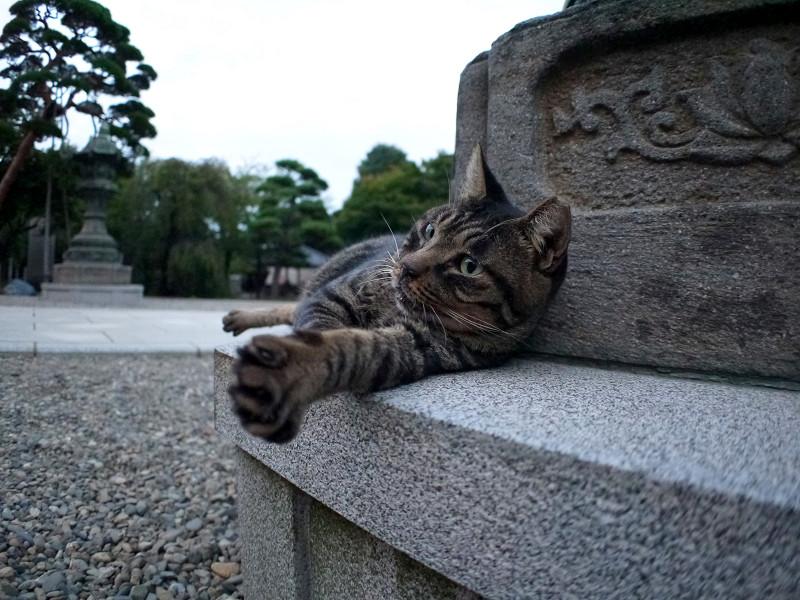 灯籠で寝ているキジトラ猫2
