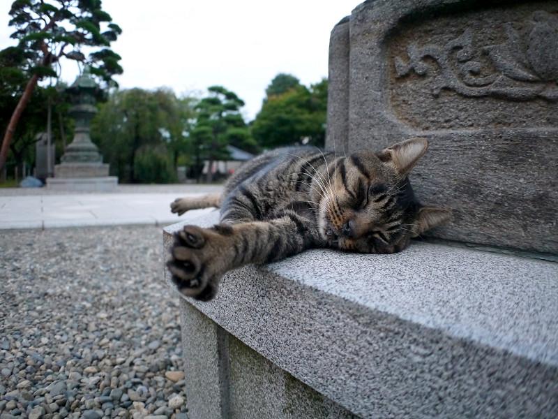 灯籠で寝ているキジトラ猫3