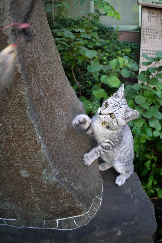 石碑でネズミと遊ぶサバトラ仔猫1