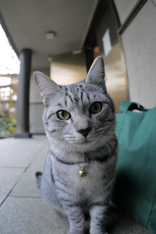 目の前のサバトラ猫1
