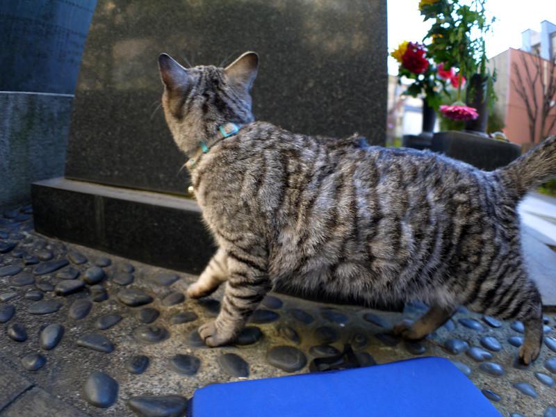 石碑とサバトラ猫1