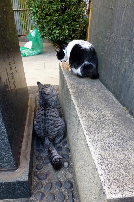 石碑の間の猫2匹