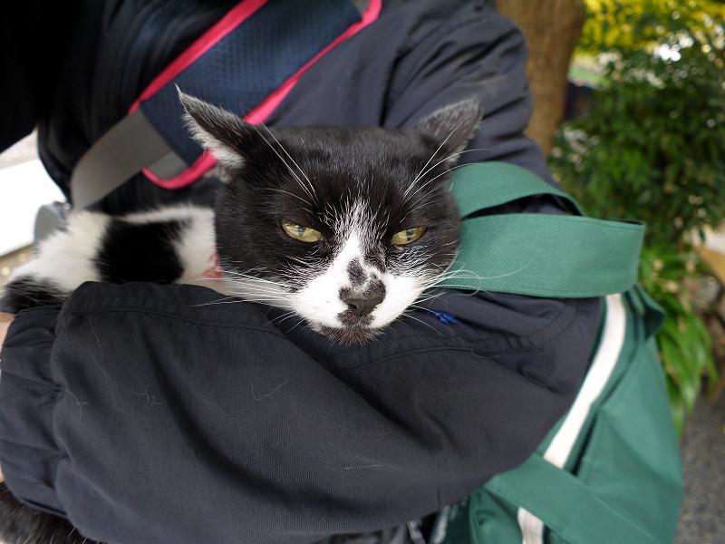 腕の中で寝ている白黒猫2