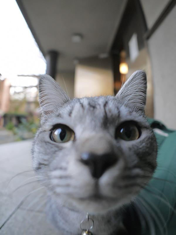目の前のサバトラ猫2