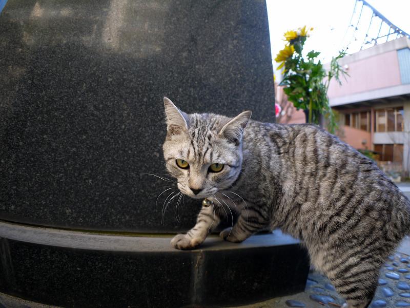 石碑とサバトラ猫2