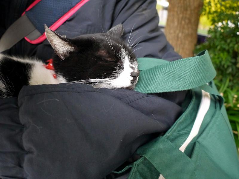腕の中で寝ている白黒猫3