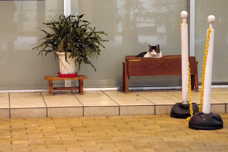 病院前の猫1