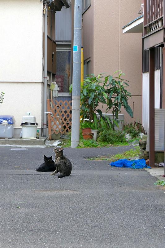 路地奥の猫たち1