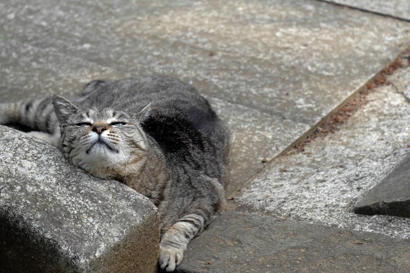 恍惚のキジトラ猫1