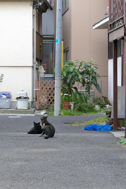 路地奥の猫たち2