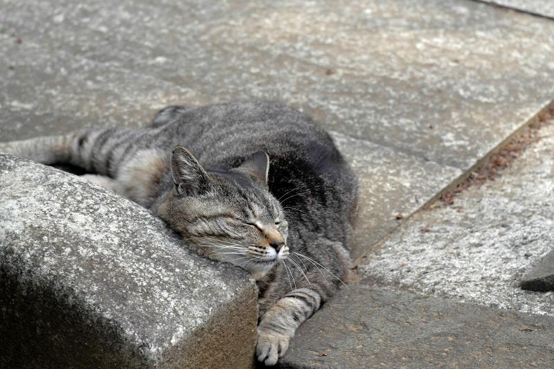 恍惚のキジトラ猫2