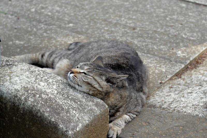 恍惚のキジトラ猫3