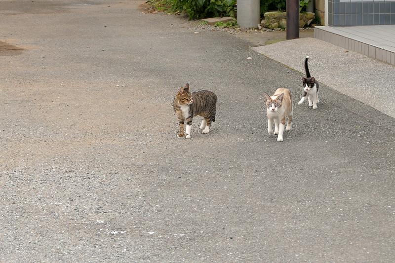 歩み寄ってくる親子猫1