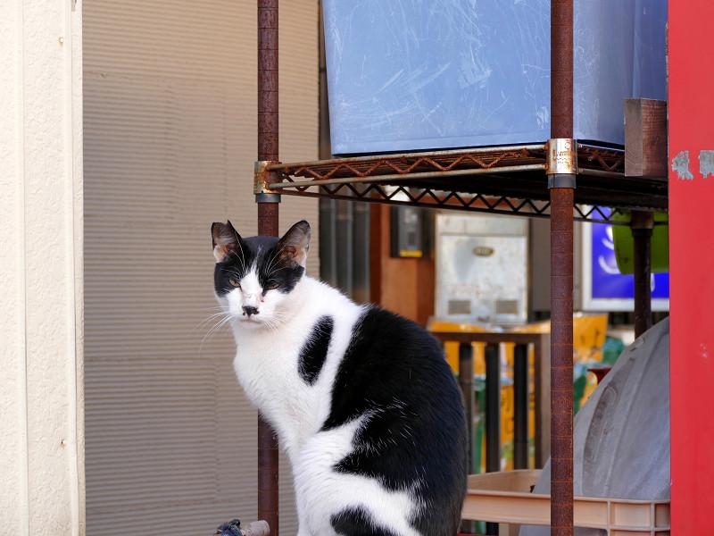 お店前の黒白猫1