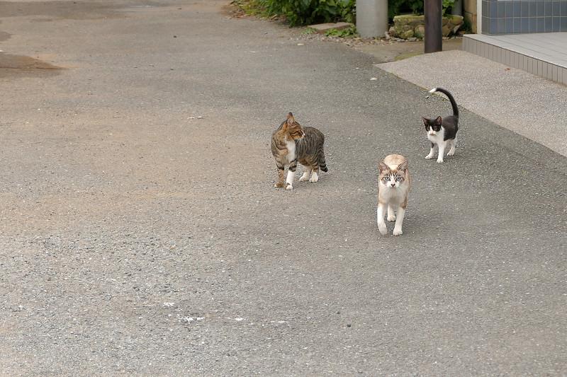 歩み寄ってくる親子猫2