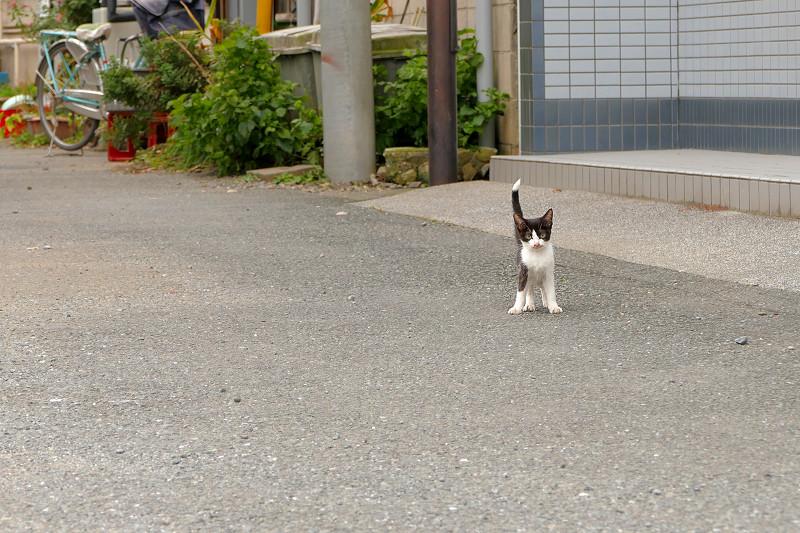 歩み寄ってくる親子猫3