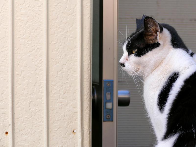 お店前の黒白猫3