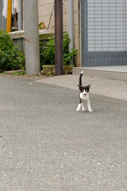 歩み寄ってくる親子猫4