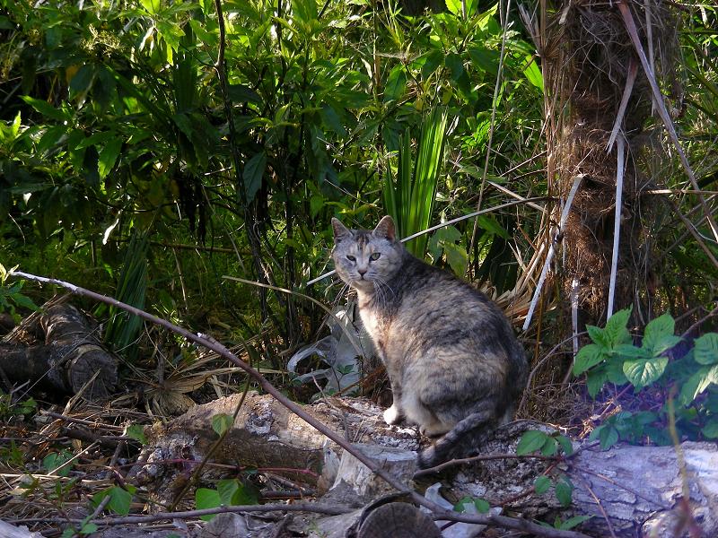 林にサビ柄猫2