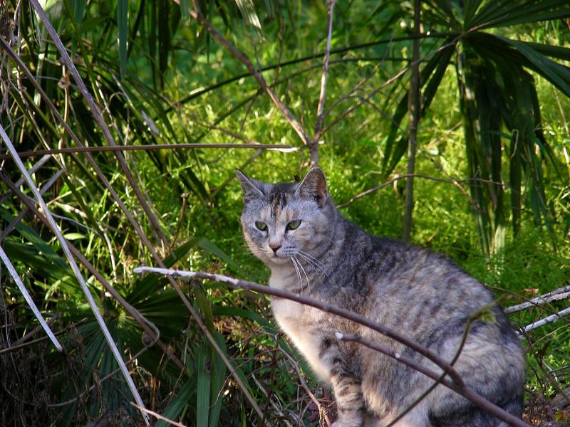 林にサビ柄猫3