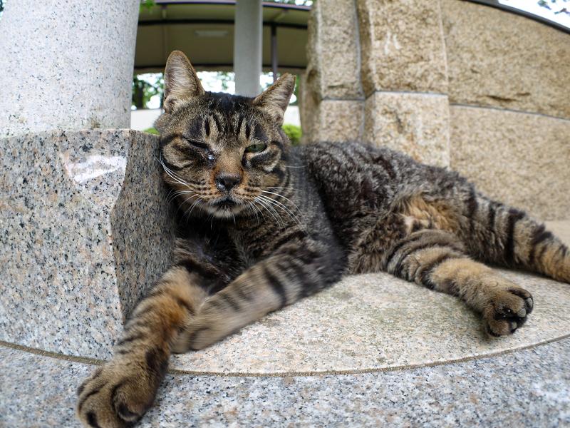 井戸端で寛ぐキジトラ猫1