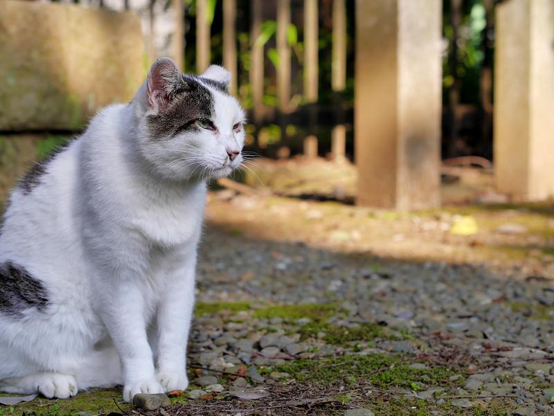濡れ縁と白キジ猫1