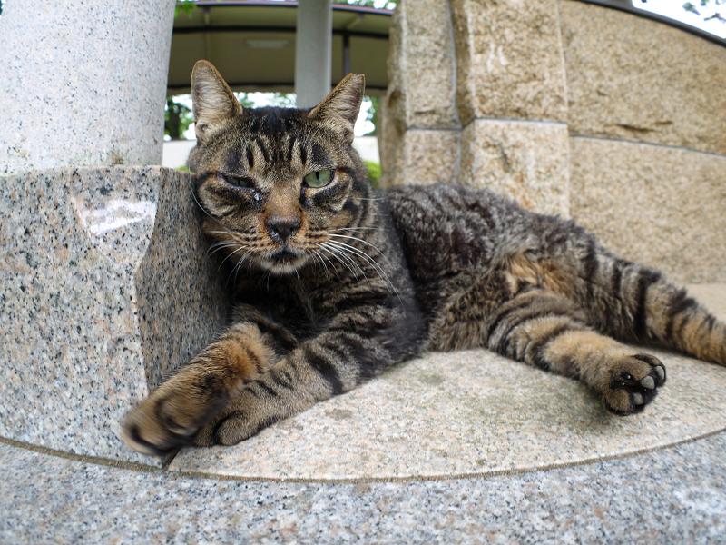 井戸端で寛ぐキジトラ猫2