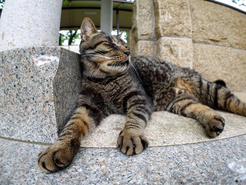 井戸端で寛ぐキジトラ猫3