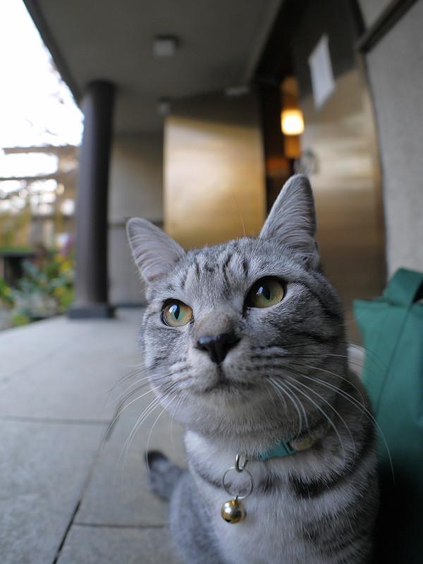 コロコロ変わるサバトラ猫の表情1