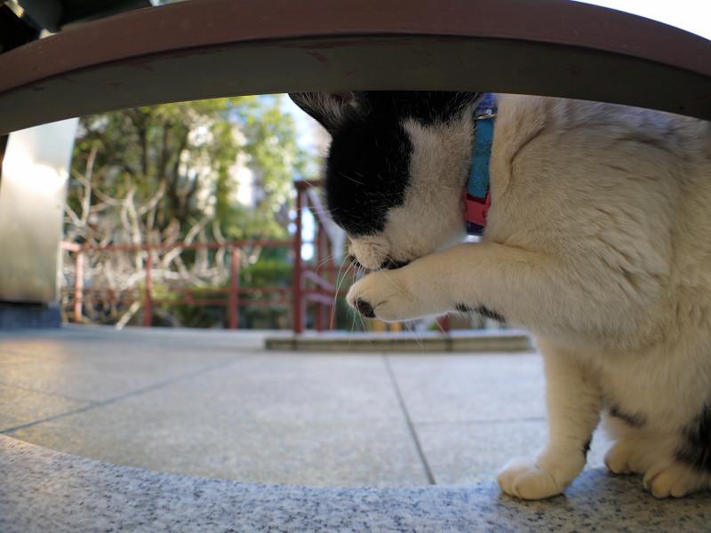 踊り場で手をなめる白黒猫1