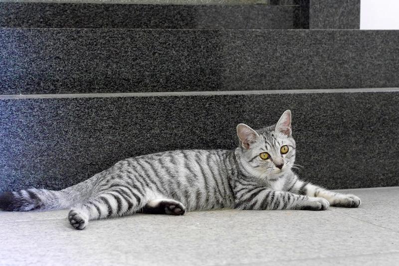 御影石台座の前のサバトラ仔猫1