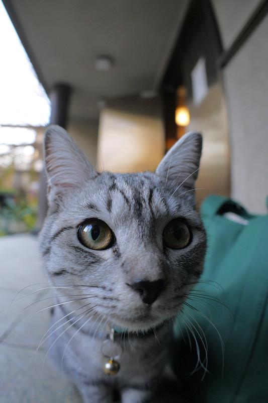 コロコロ変わるサバトラ猫の表情2