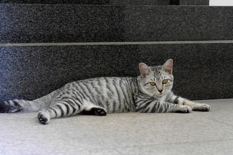 御影石台座の前のサバトラ仔猫2