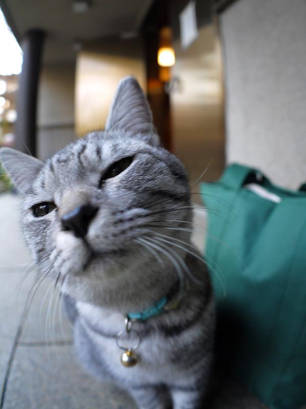 コロコロ変わるサバトラ猫の表情3