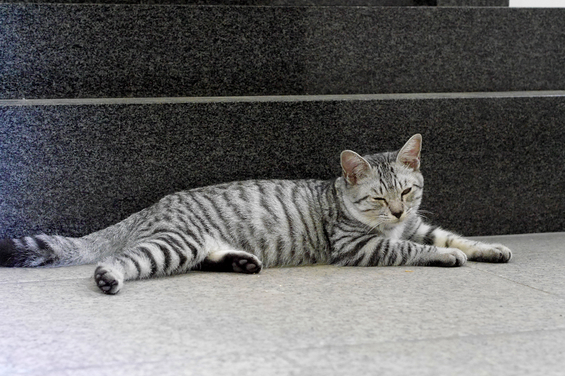 御影石台座の前のサバトラ仔猫3
