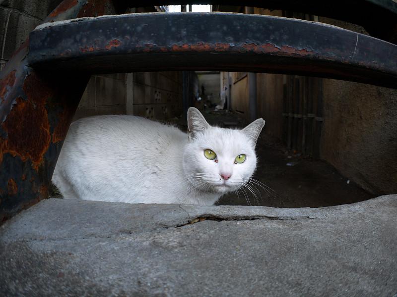 階段隙間の白猫1