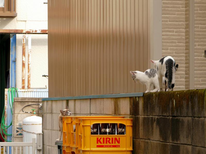 ブロック塀を移動した猫たち1