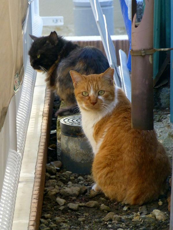 工事現場の猫たち