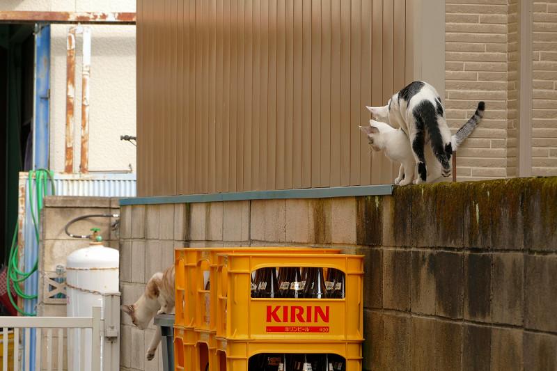 ブロック塀を移動した猫たち3