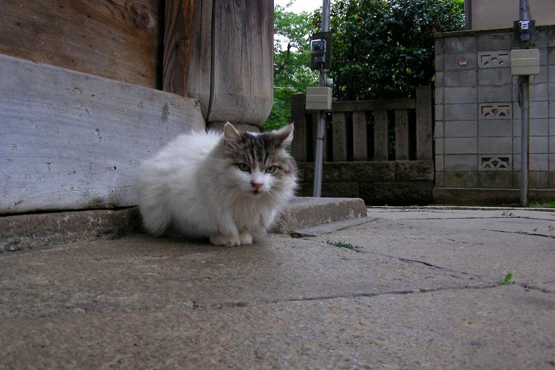 総門前の毛が長い猫2