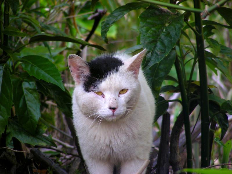 茂みから白黒猫2