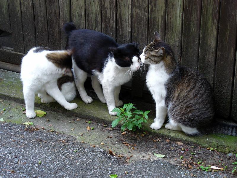 引き戸前の猫3匹1