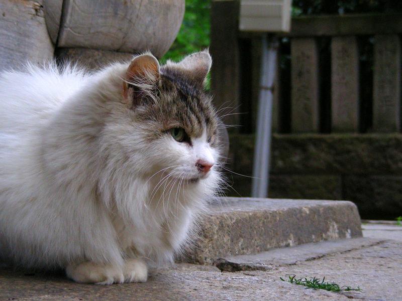総門前の毛が長い猫3