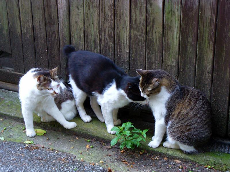 引き戸前の猫3匹2